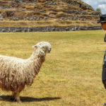 Day 1: Visit to the City Tuur including Sacsayhuaman Fortress